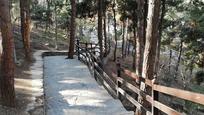 بوستان جنگلی طالقانی