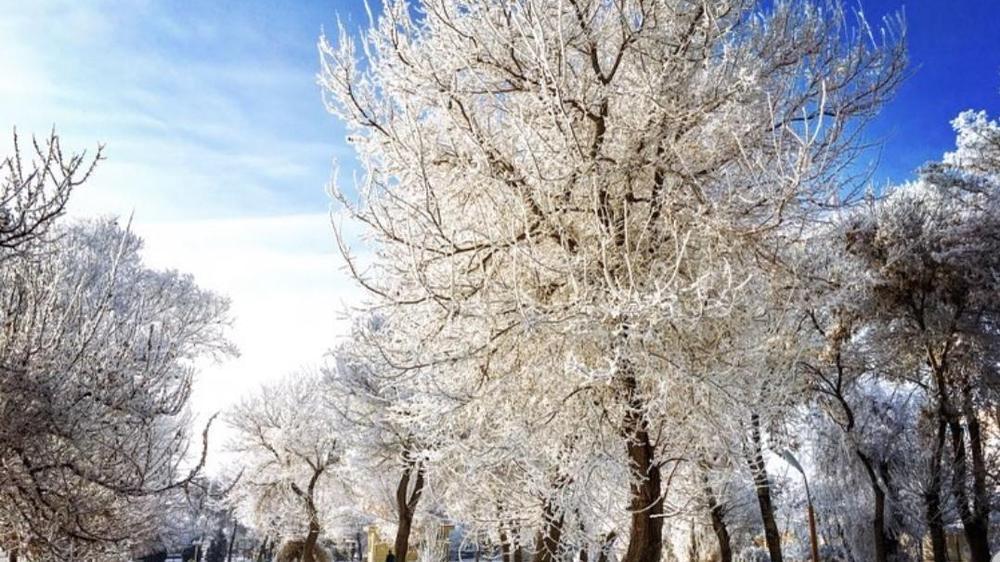 بوستان بهشتی